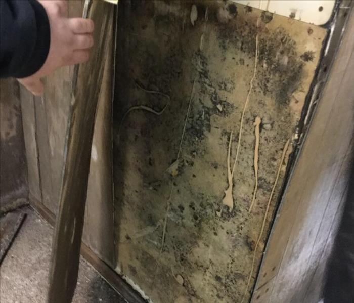 Mold Remediation Mold Inspection