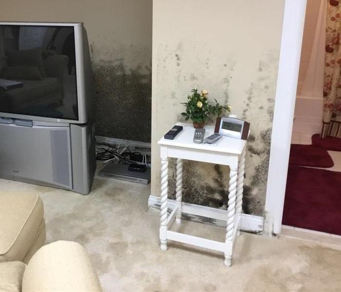 Mold Remediation Microbial Growth