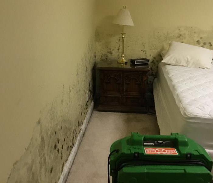 Mold Remediation Mold Tips