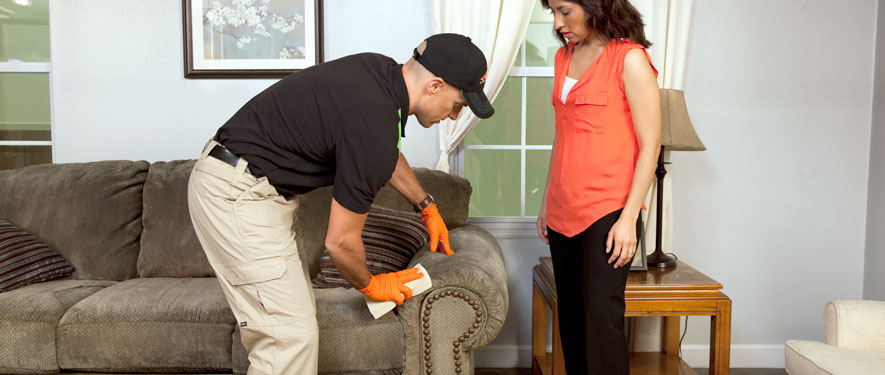 Brandywine, DE carpet upholstery cleaning